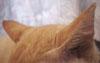耳のアップ画像